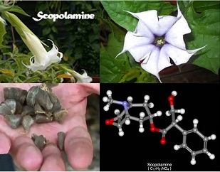 http://blog.tecsys.in/wp-content/uploads/2014/03/scopolamine-final.jpg
